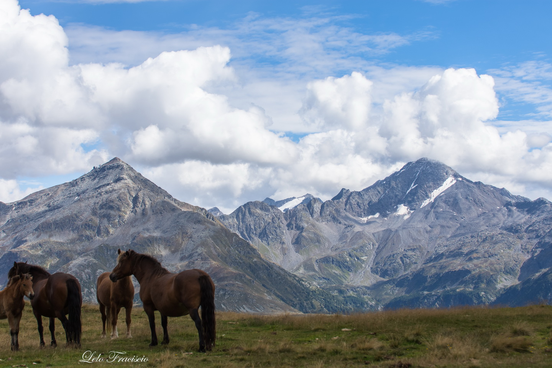 cavalli-res